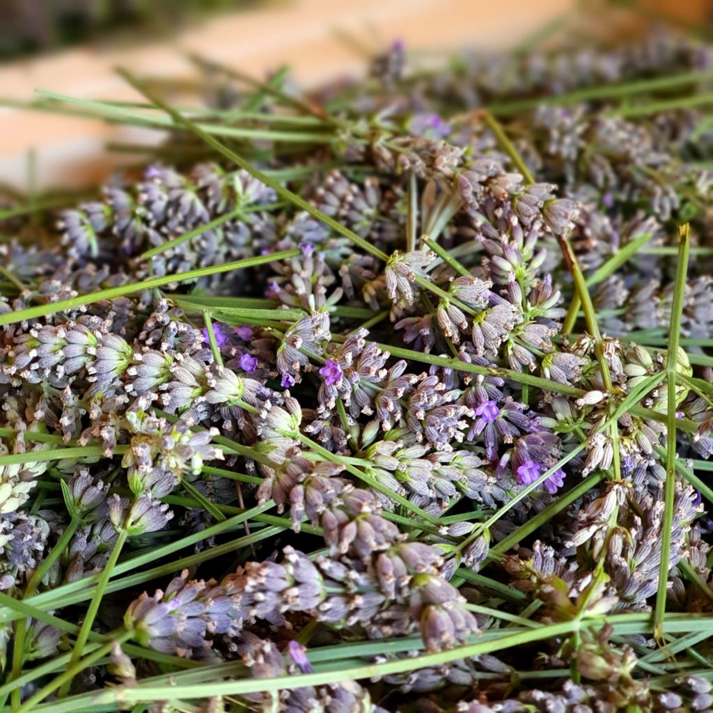 Processing lavender for Mei Line at la Baye des Anges